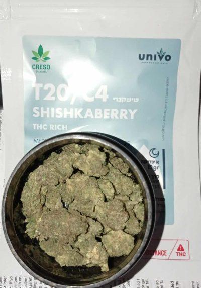 שישקברי (Shishkaberry) - אינדיקה T20/C4
