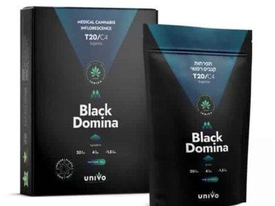 בלאק דומינה (Black Domina) - אינדיקה T20/C4