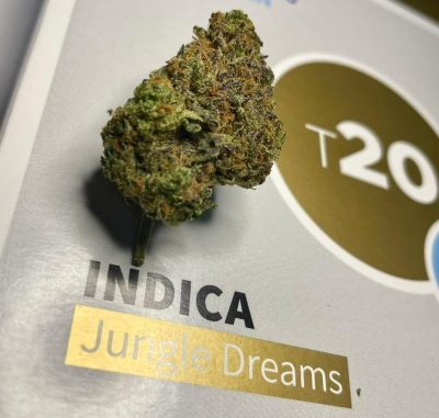 ג'אנגל דרימס (Jungle Dreams) - אינדיקה - T20/C4