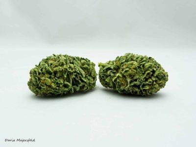 פמפקין קראש (Pumpkin Crush) - אינדיקה T15/C3
