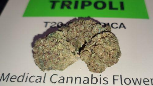 טריפולי (TRIPOLI) - אינדיקה T20/C4 photo review