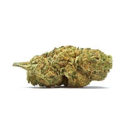 תפרחת למונגראס (Lemongrass) - היבריד T20/C4